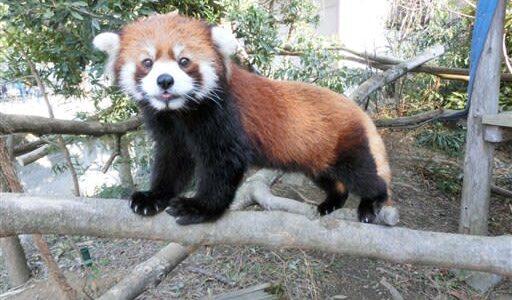 熊本市動植物園、100周年記念サポーター創設 提案型支援も募る