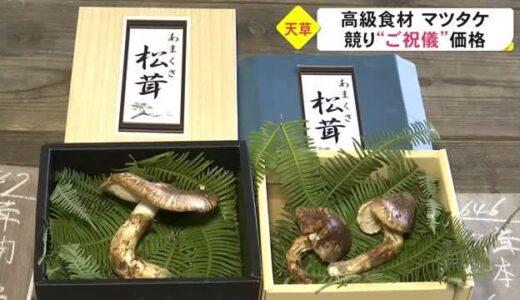 「日本一早い」といわれる春マツタケの競り(熊本)