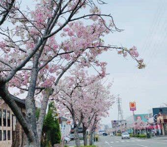【平成】京生麩と旬の食材で健康美活できるお得ランチ発見!