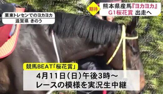熊本市生まれのサラブレッド「ヨカヨカ」が桜花賞に出走へ(熊本)
