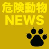(熊本)熊本市南区江越1丁目でシカ出没 4月14日昼過ぎ